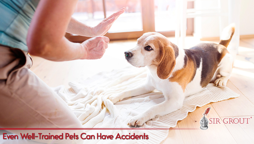 Even Well-Trained Pets Can Have Accidents